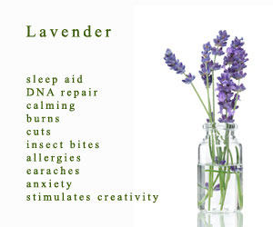 photo by Jenny Stone; www.trydoterra.com/lavender-essential-oil