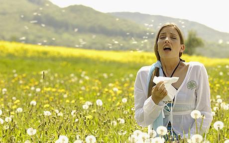 Fight Allergies Naturally ; Allergy Blend Recipe,  Immune Boosting Essential Oils, Allergen Home Spray Recipe (1/3)