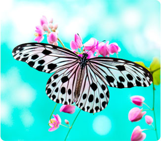 happy spring! butterflybluesky istock photo by  szefei