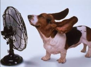 hot day doggie fan