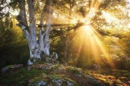 sunlight-thru-the-tree